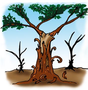 Sólo los árboles creen que todo crece hacia arriba y hacia abajo, por eso son sabios