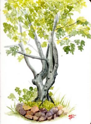 Mis queridos árboles: la figuera